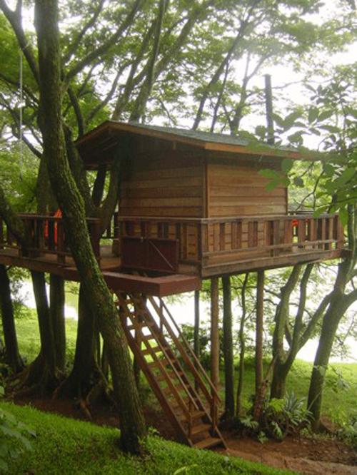 Arquitetura e decoração de casa na árvore - Casa sobre árvores aglomerado de flamboyands 001