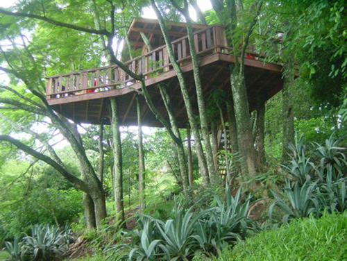 Arquitetura e decoração de casa na árvore - Casa sobre árvores  aglomerado de flamboyands 003