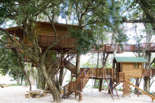 Arquitetura e decoração de casa na árvore - Casa sobre árvores de  eucaliptos 001
