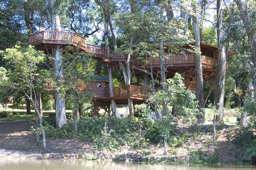 Arquitetura e decoração de casa na árvore - Casa sobre árvores de eucaliptos 004