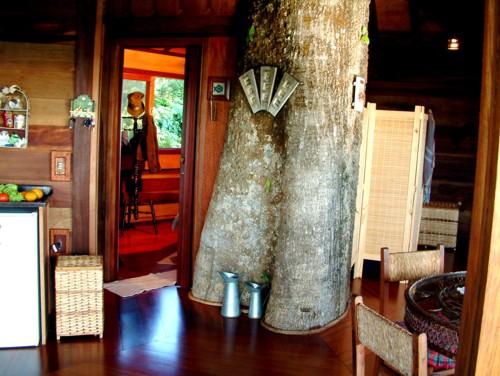 Arquitetura e decoração de casa na árvore - Casa sobre árvores de Figueira Centenária 001