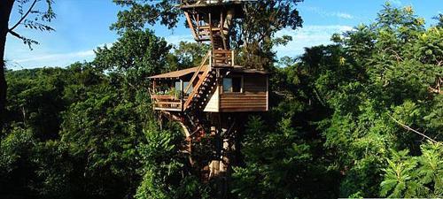 Arquitetura e decoração de casa na árvore - Casa sobre árvores de  Figueira Centenária 003