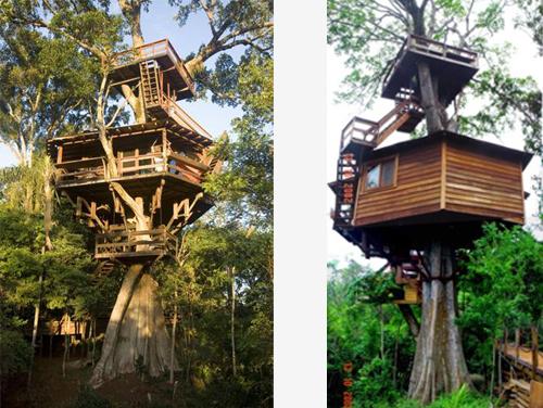 Arquitetura e decoração de casa na árvore - Casa sobre árvores de  Figueira Centenária 013